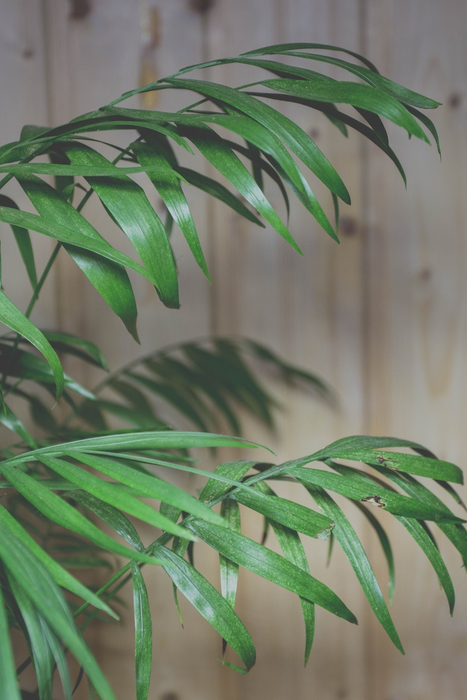 Green Palm Plant