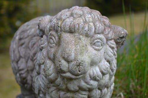 Kostnadsfri bild av betong, får, lamm, trädgård