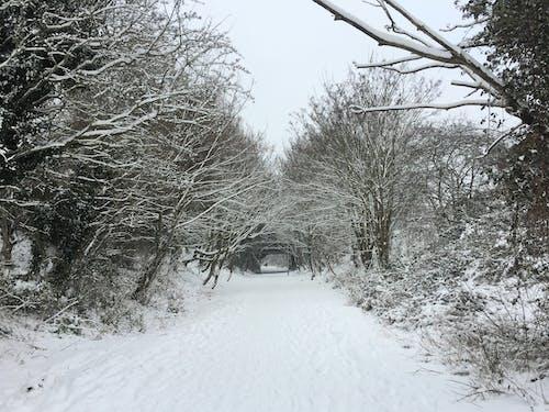 ağaçlar, buz, buz tutmuş, dallar içeren Ücretsiz stok fotoğraf