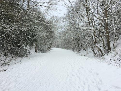 冬, 小径, 木, 森林の無料の写真素材