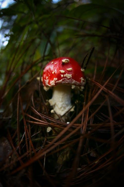 Close-Up Shot of Mushroom