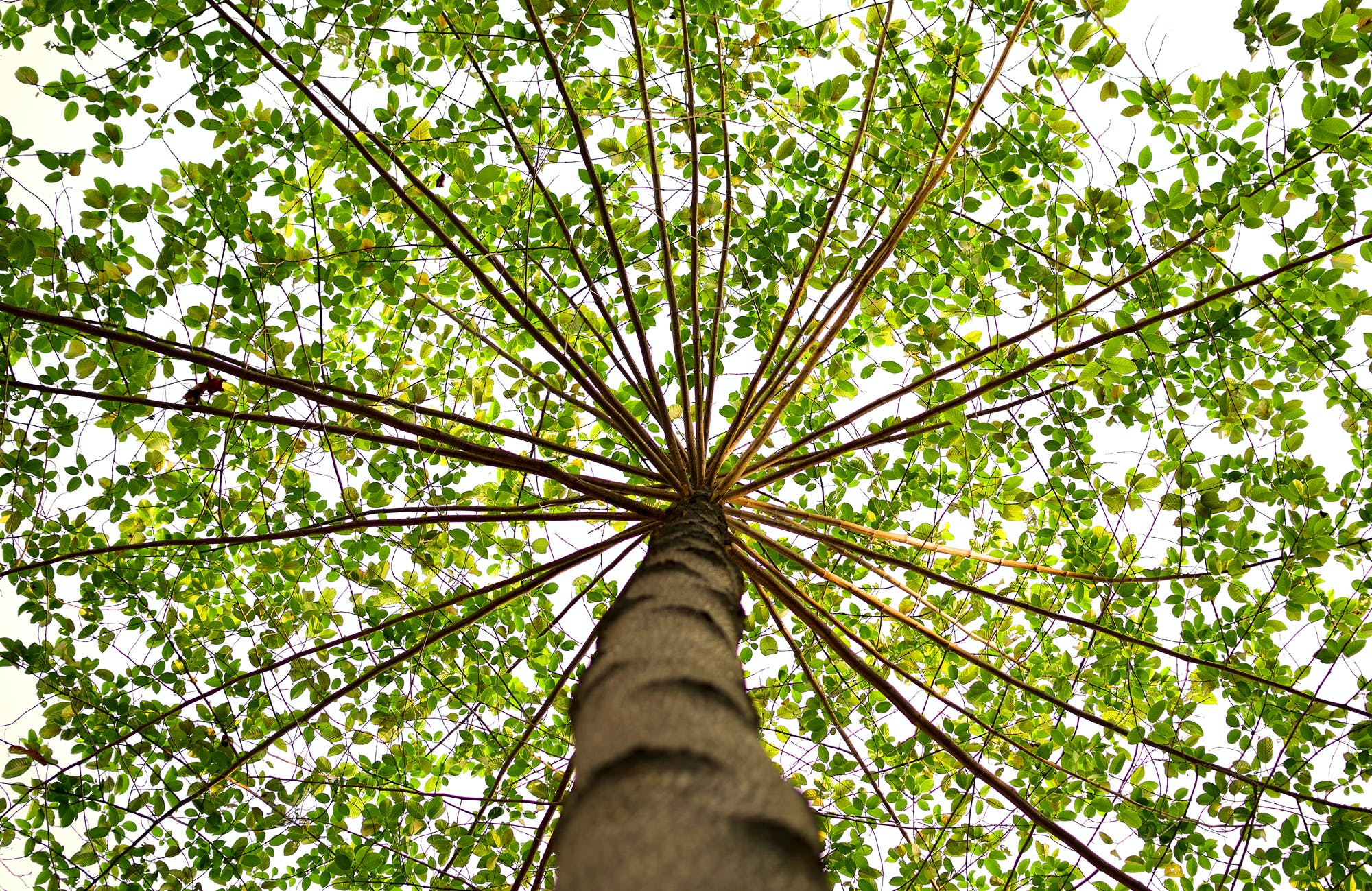 Bottom View of Green Leaved Tree during Daytime