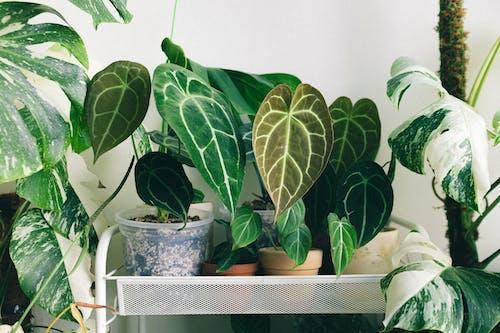 Kostenloses Stock Foto zu blatt, blume, botanisch
