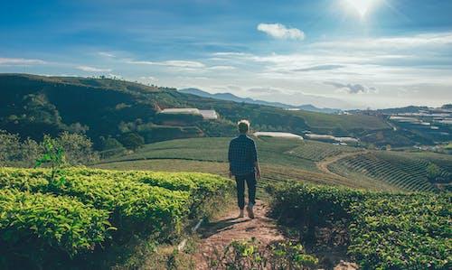 Δωρεάν στοκ φωτογραφιών με αγρόκτημα, αγροτικός, άνδρας, άνθρωπος
