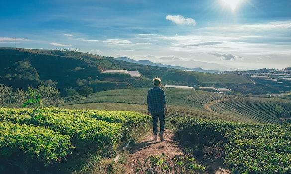 Man Standing in Between Fields