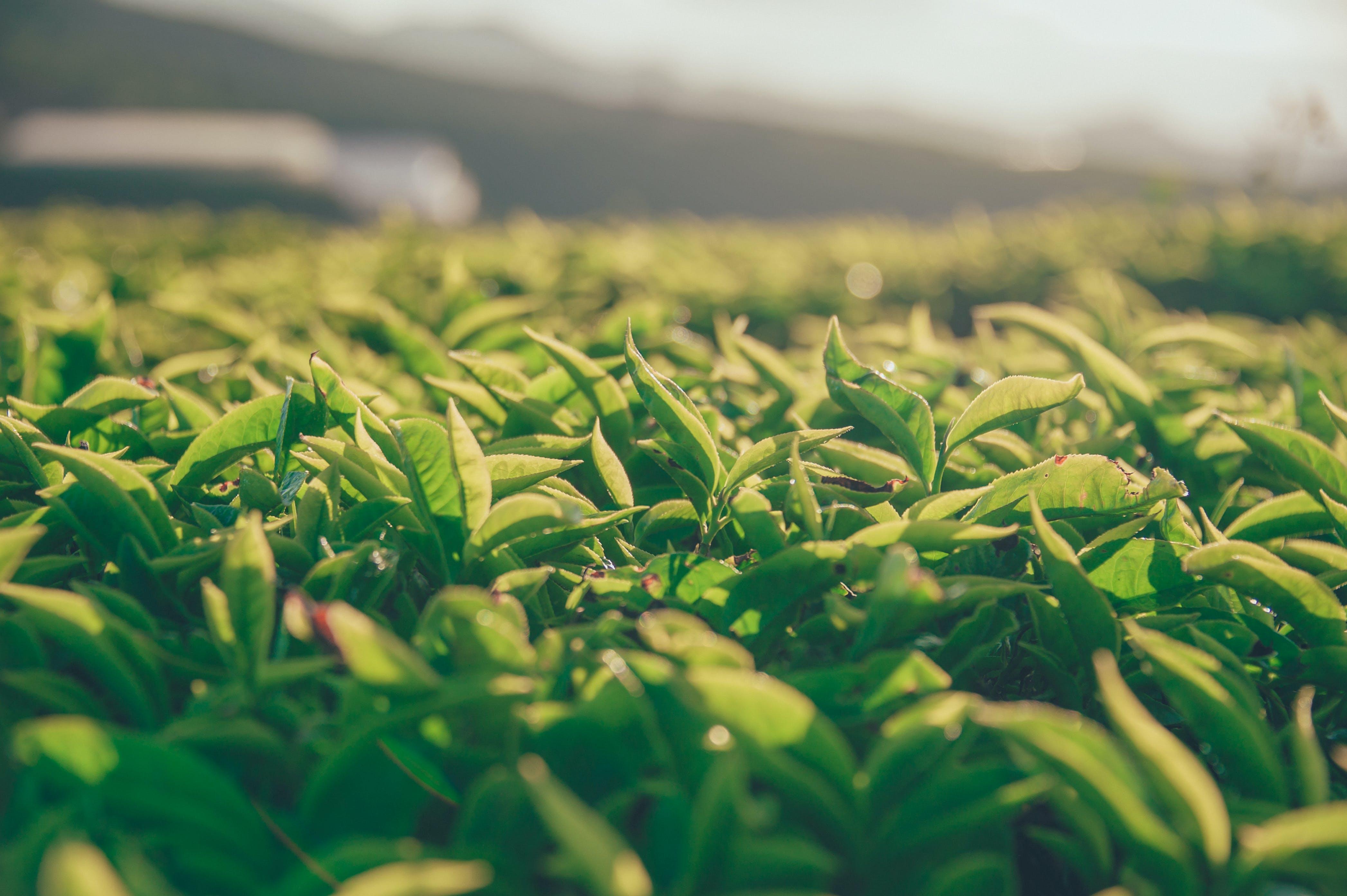 Foto d'estoc gratuïta de creixement, desenfocament, fullatge, herba