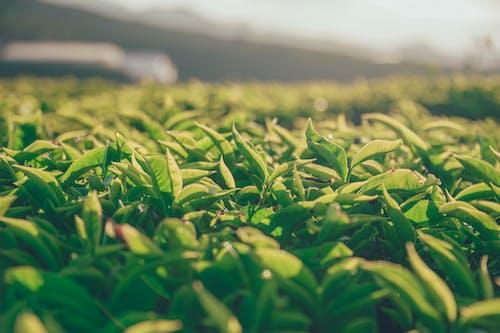 Immagine gratuita di ambiente, crescita, erba, fogliame