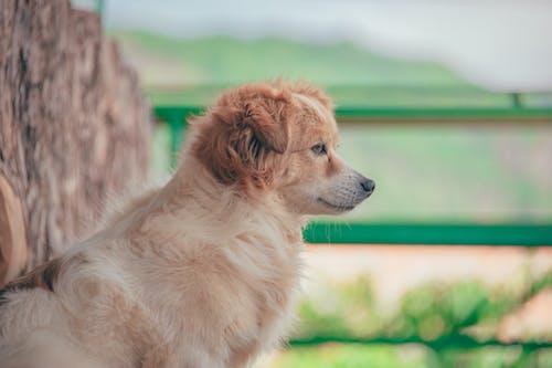 かわいらしい, ペット, 側面図, 動物の無料の写真素材