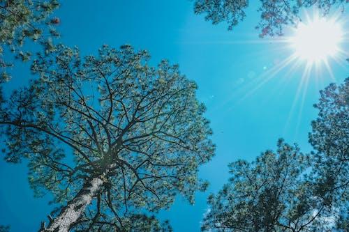 Gratis stockfoto met bomen, boom, bossen, daglicht