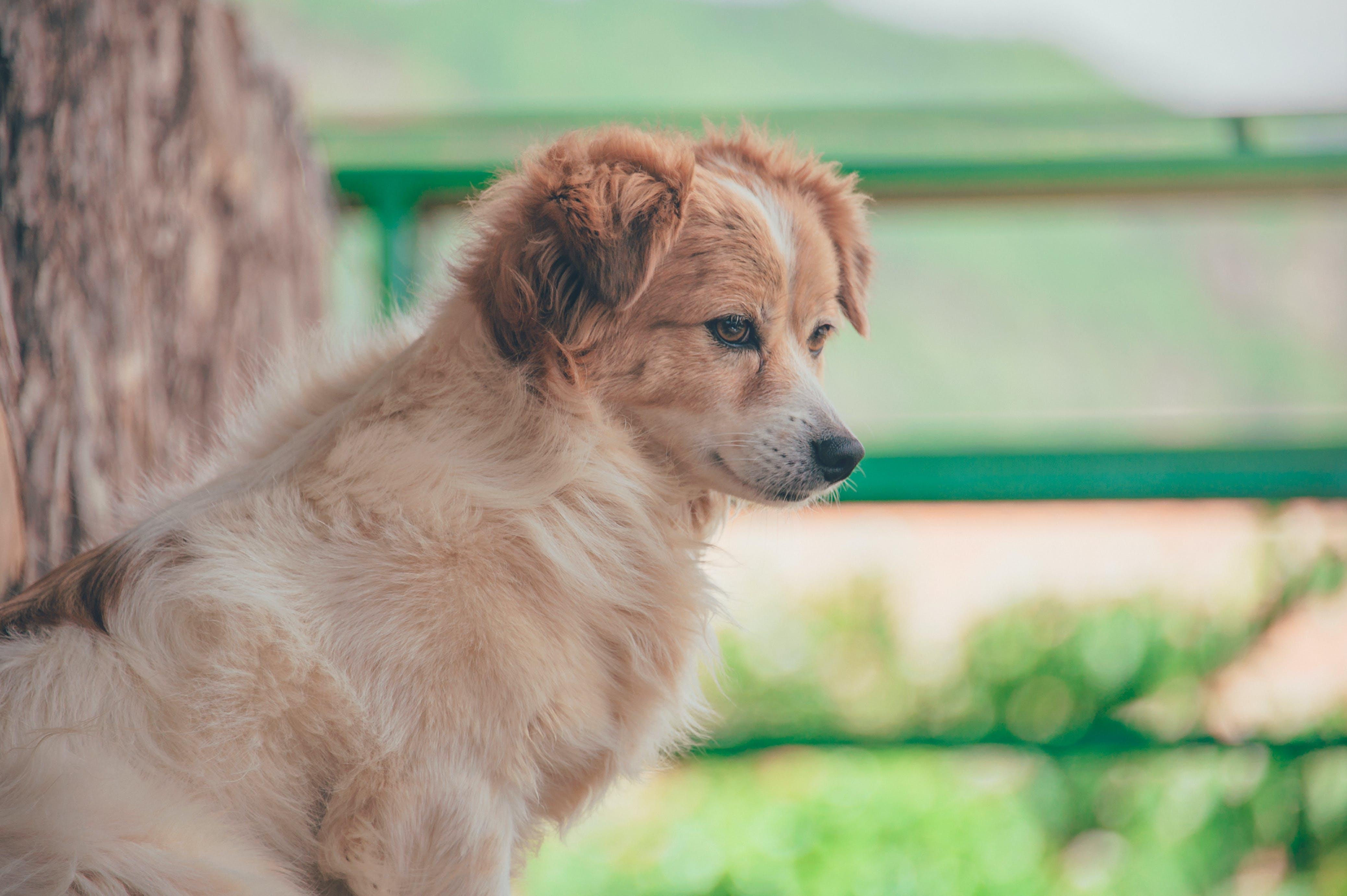 Close-Up Photography of Dog