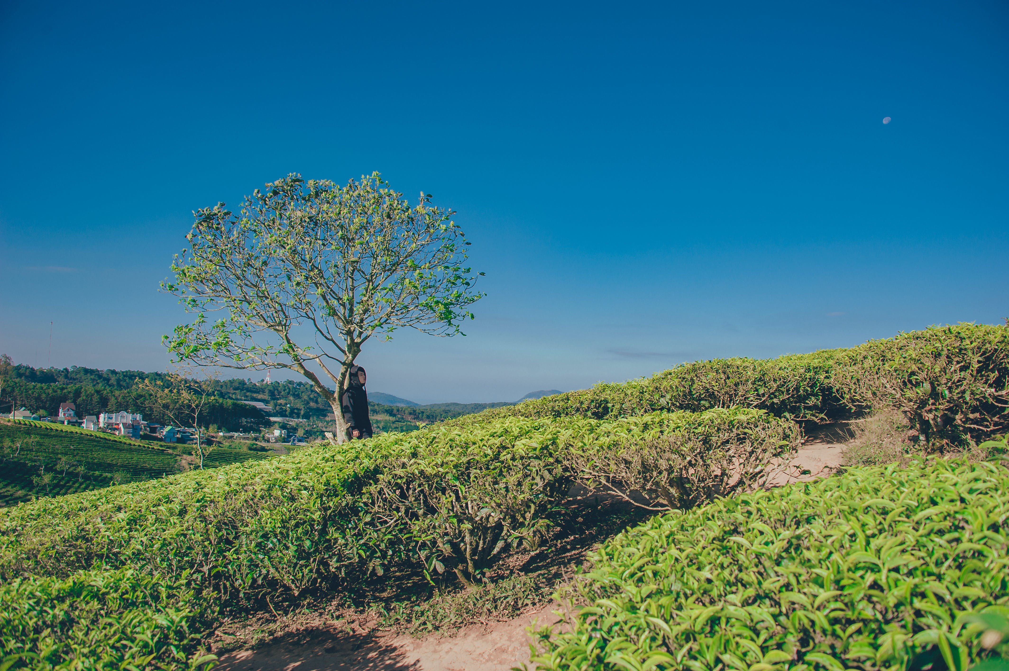 Landscape Photography of Green Tree