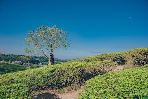 Fotobanka sbezplatnými fotkami na tému denné svetlo, flóra, kopec, krajina