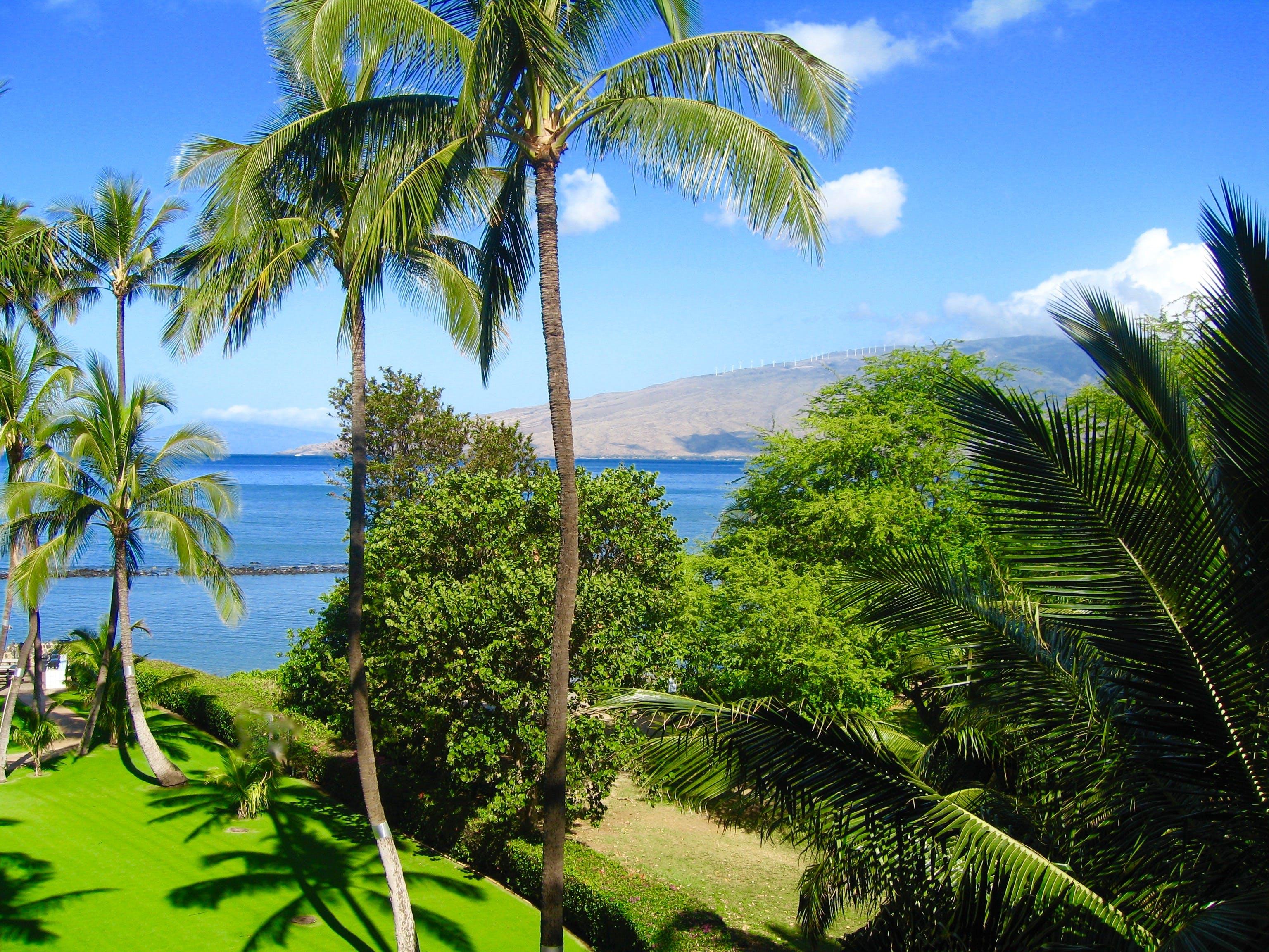 Free stock photo of Maui Hawaii Beach Palm Trees