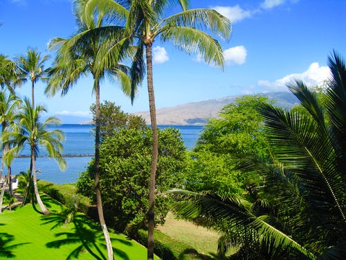 Free stock photo of Maui Hawaii Beach Palm Trees