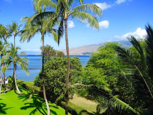 Darmowe zdjęcie z galerii z maui hawaii beach palm trees