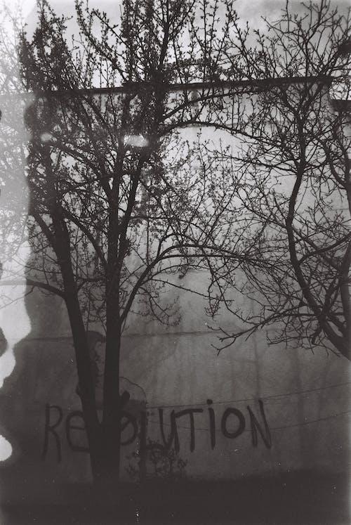Immagine gratuita di alberi spogli, bianco e nero, esterno