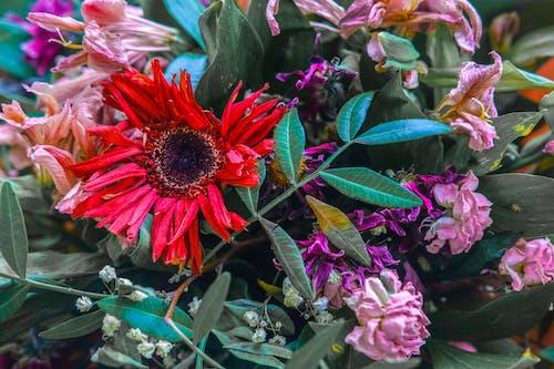 Fotos de stock gratuitas de al aire libre, bonito, botánico