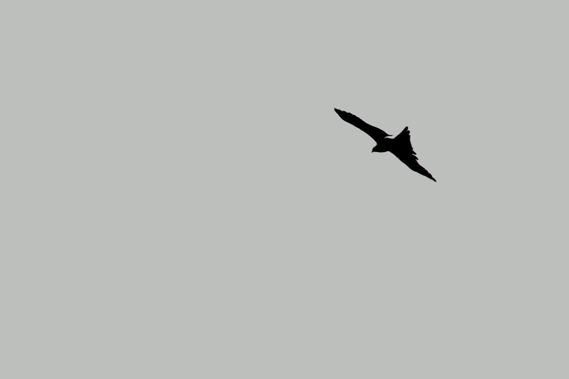 Free stock photo of adobe photoshop, kite, minimal
