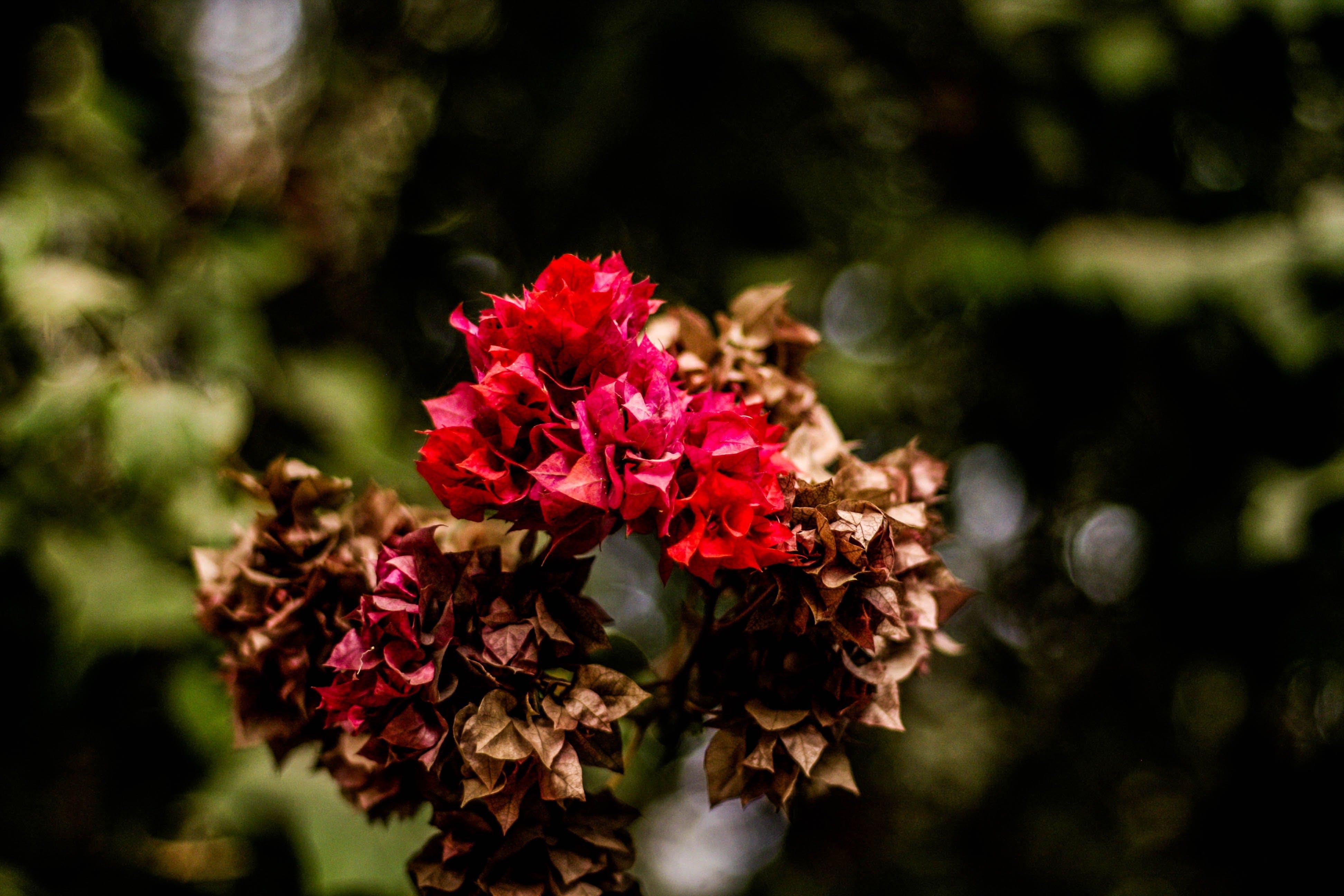 Foto profissional grátis de broto, flora, flores, macro