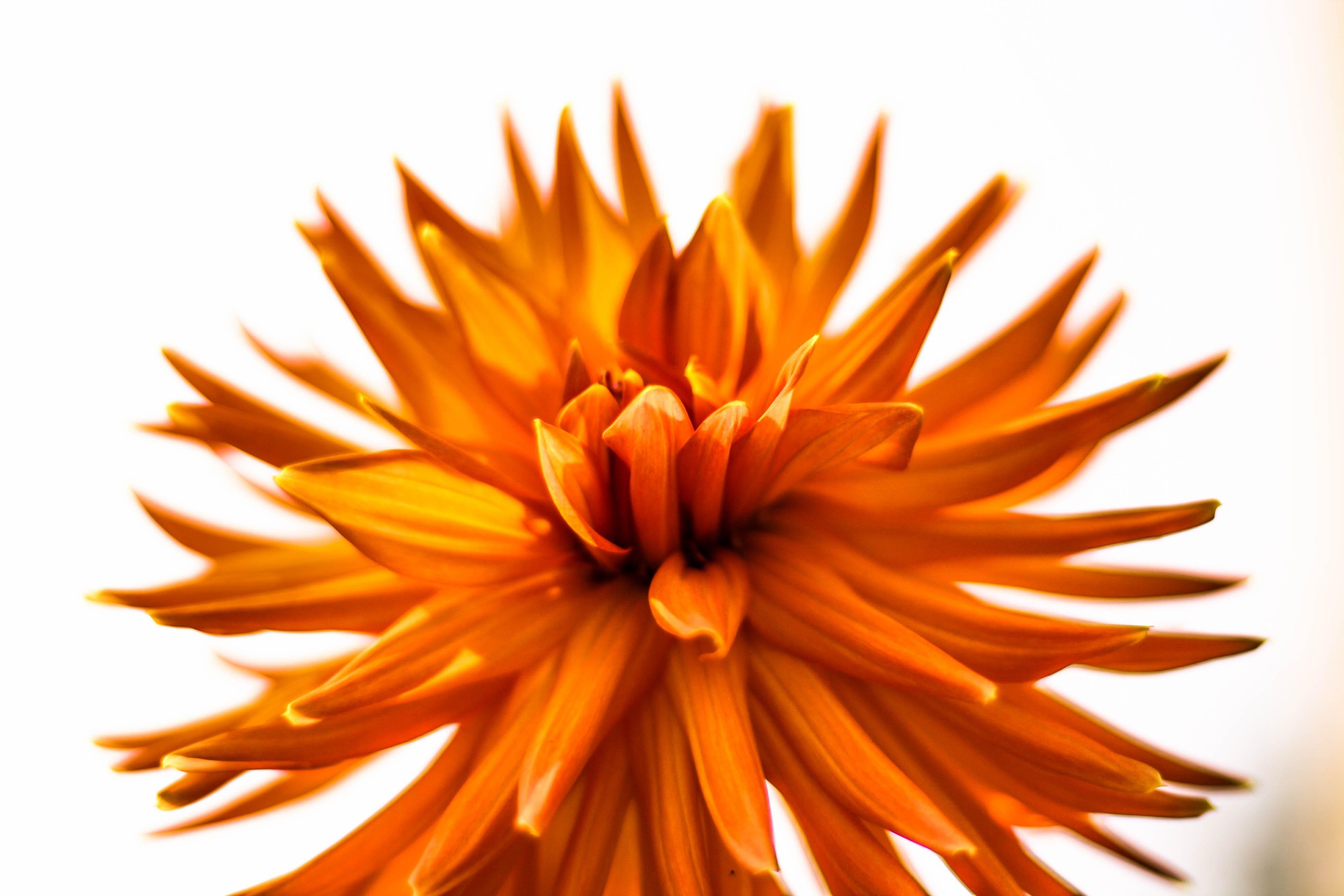Closeup Photography of Orange Petaled Flowers