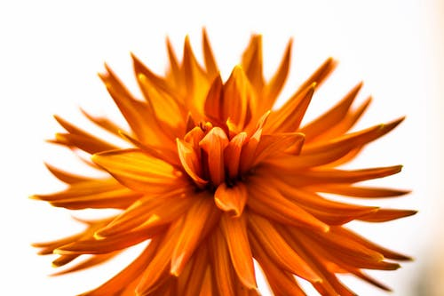 Closeup Photography of Orange Petaled Flowers