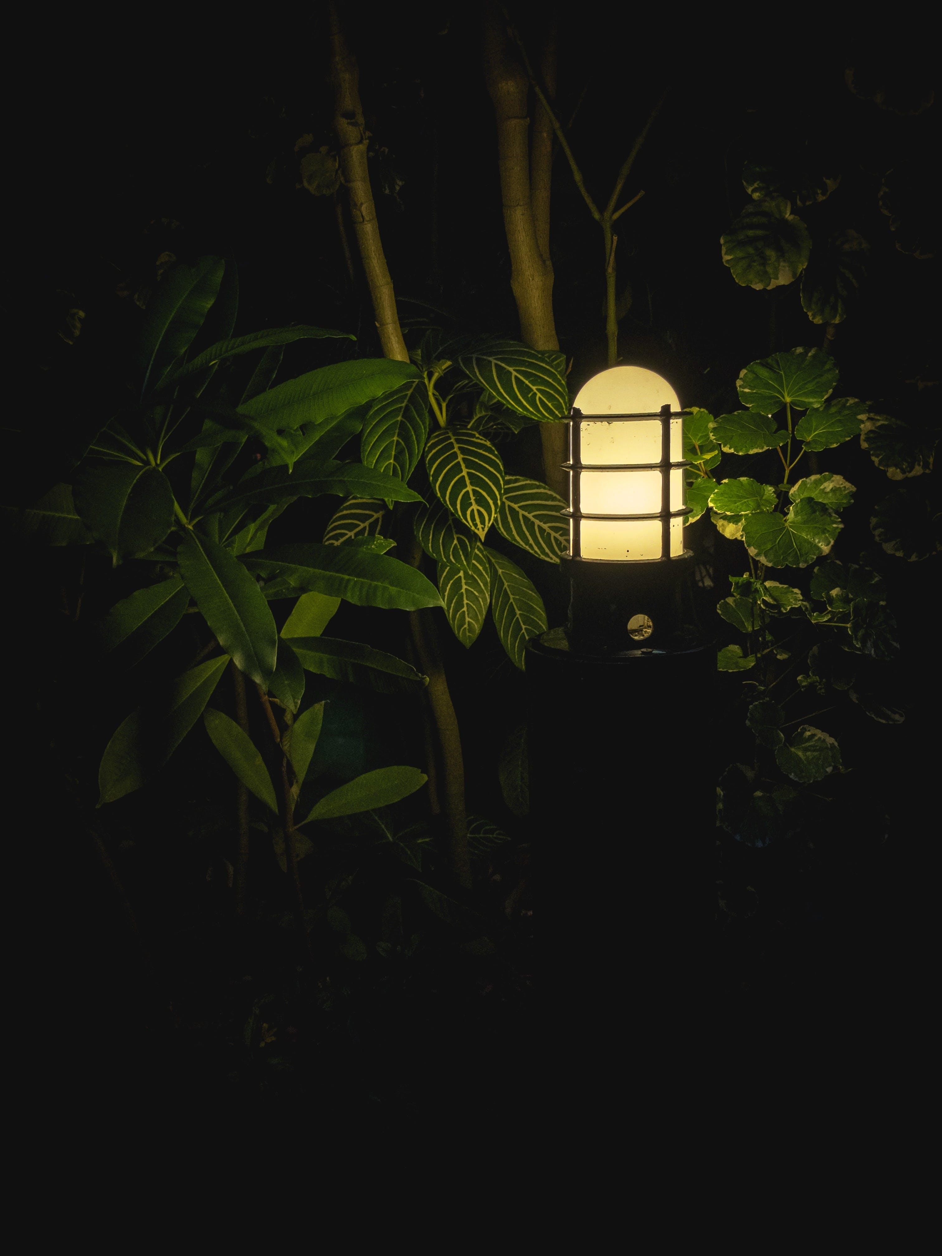 Free stock photo of branches, brightness, contrast, dark