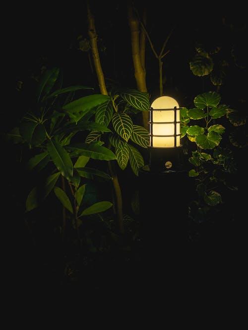 Imagine de stoc gratuită din arbore, ascunde, contrast, crengi