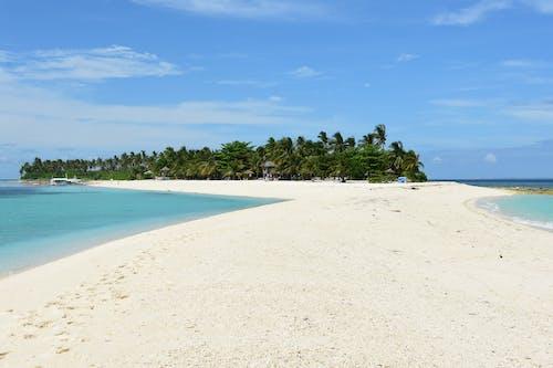 Бесплатное стоковое фото с деревья, дневное время, курорт, море