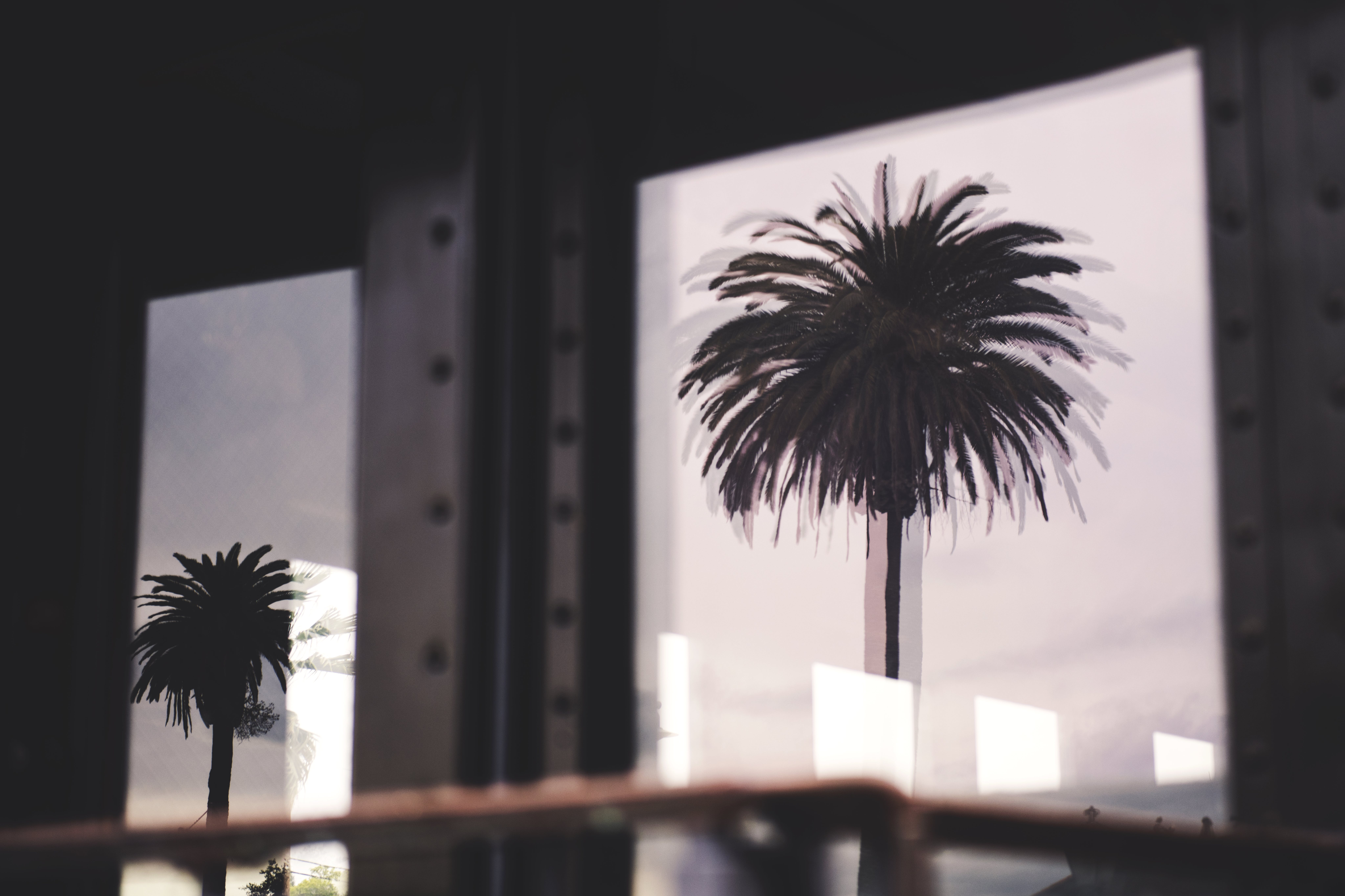 Silhouette Photo of Two Palm Trees