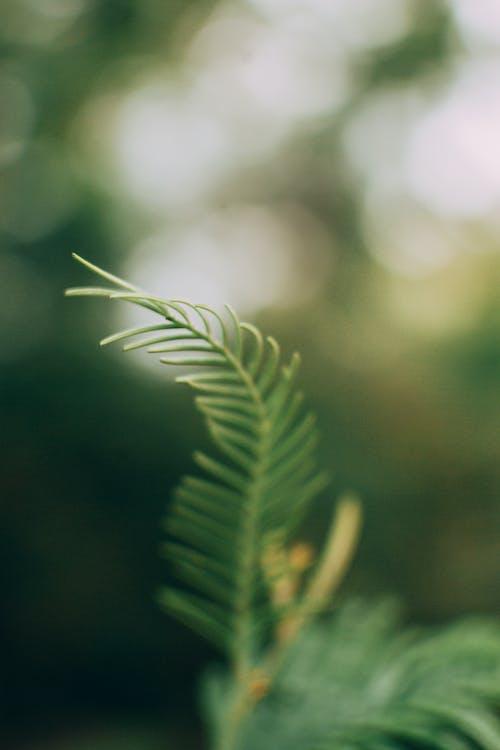 Fotos de stock gratuitas de al aire libre, árbol, color