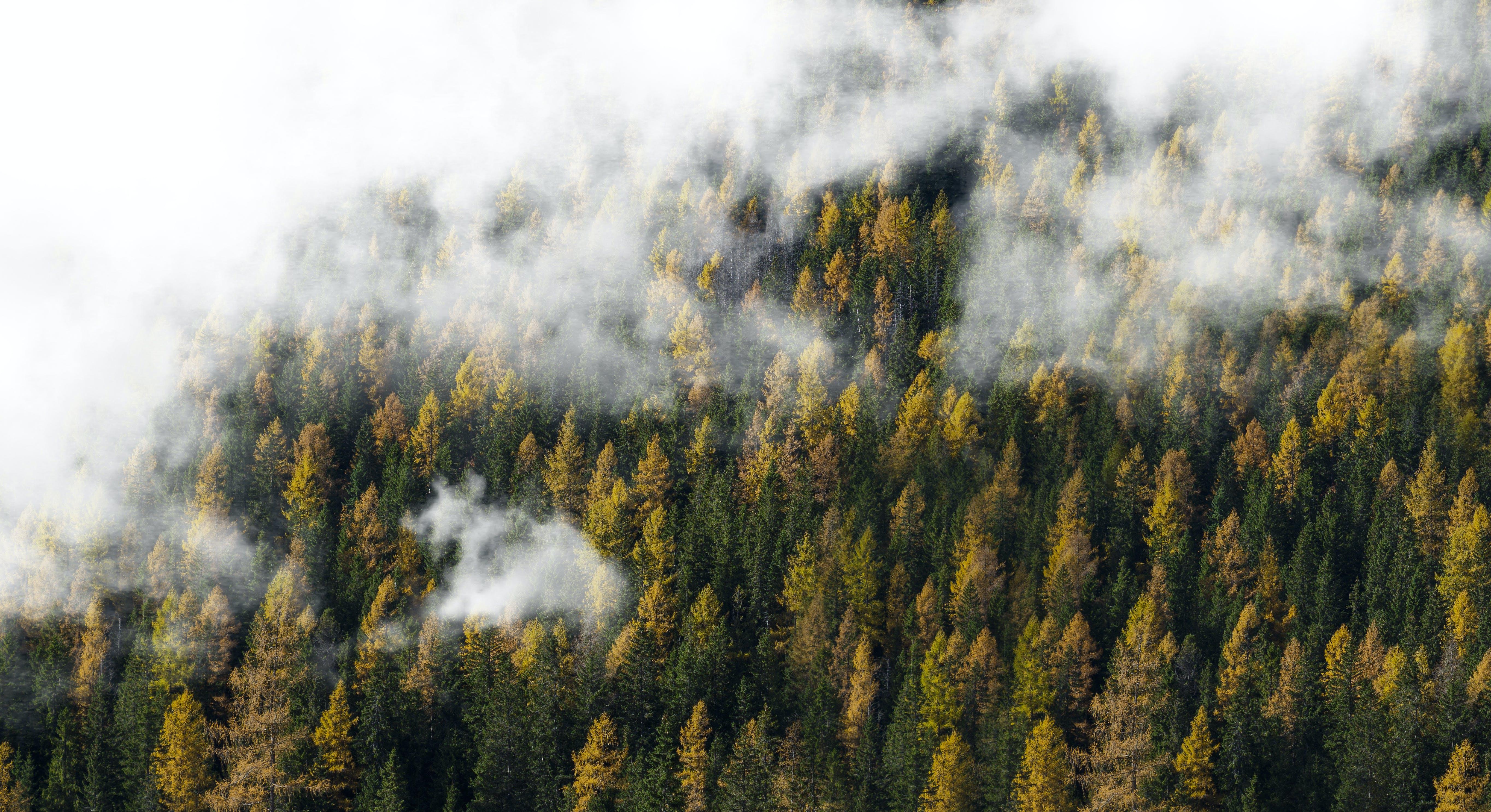 Kostenloses Stock Foto zu natur, wolken, wald, bäume