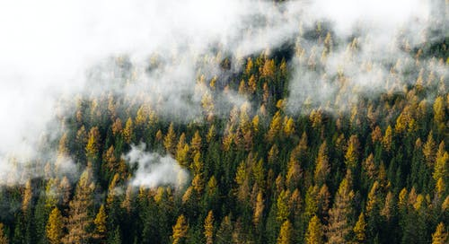 Kostnadsfri bild av dimma, dimmig, falla, höst