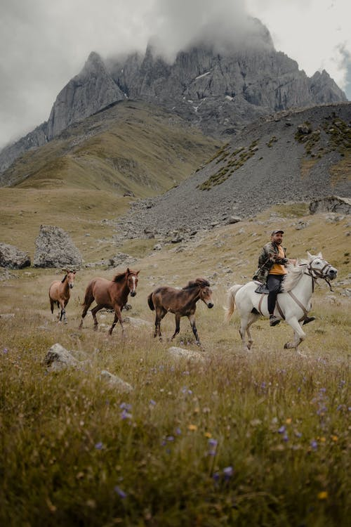 Foto stok gratis di luar rumah, duduk, gunung