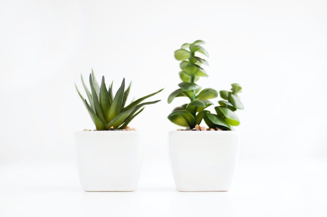 minimalism, minimalist, plant