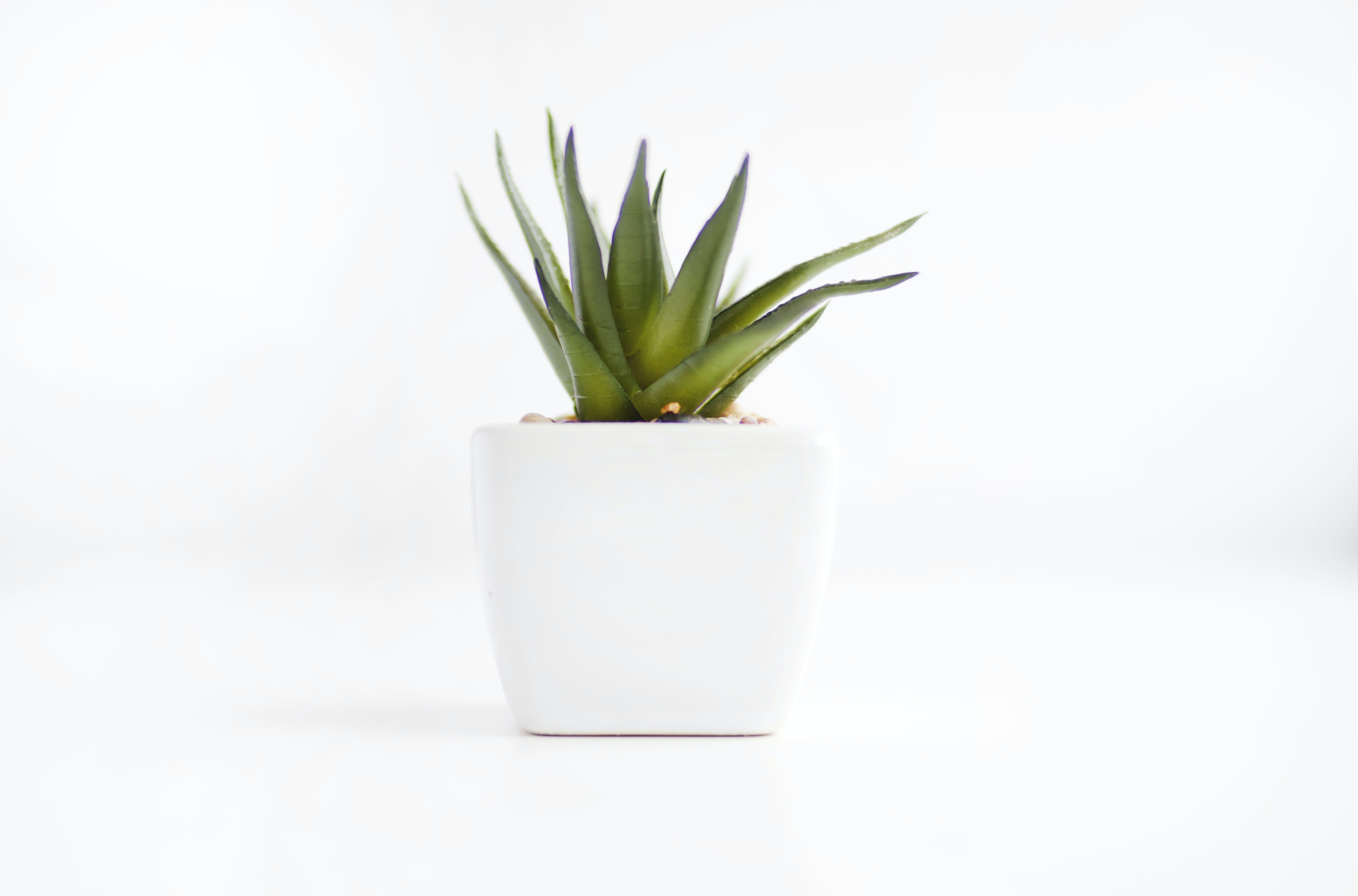 Free stock photo of minimalism, minimalist, plant, succulent