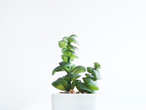 Immagine gratuita di ambiente, bianco, buccia, cactus