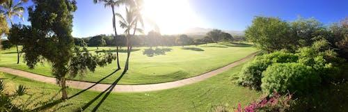 Darmowe zdjęcie z galerii z zielone pole golfowe z palmami