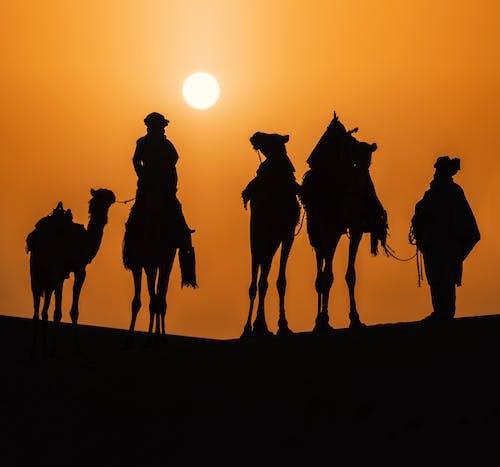 Free stock photo of algeria, art, backlit