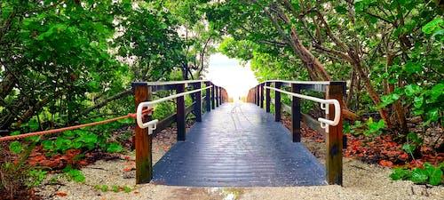 Immagine gratuita di bellissimo, madre natura, ponte
