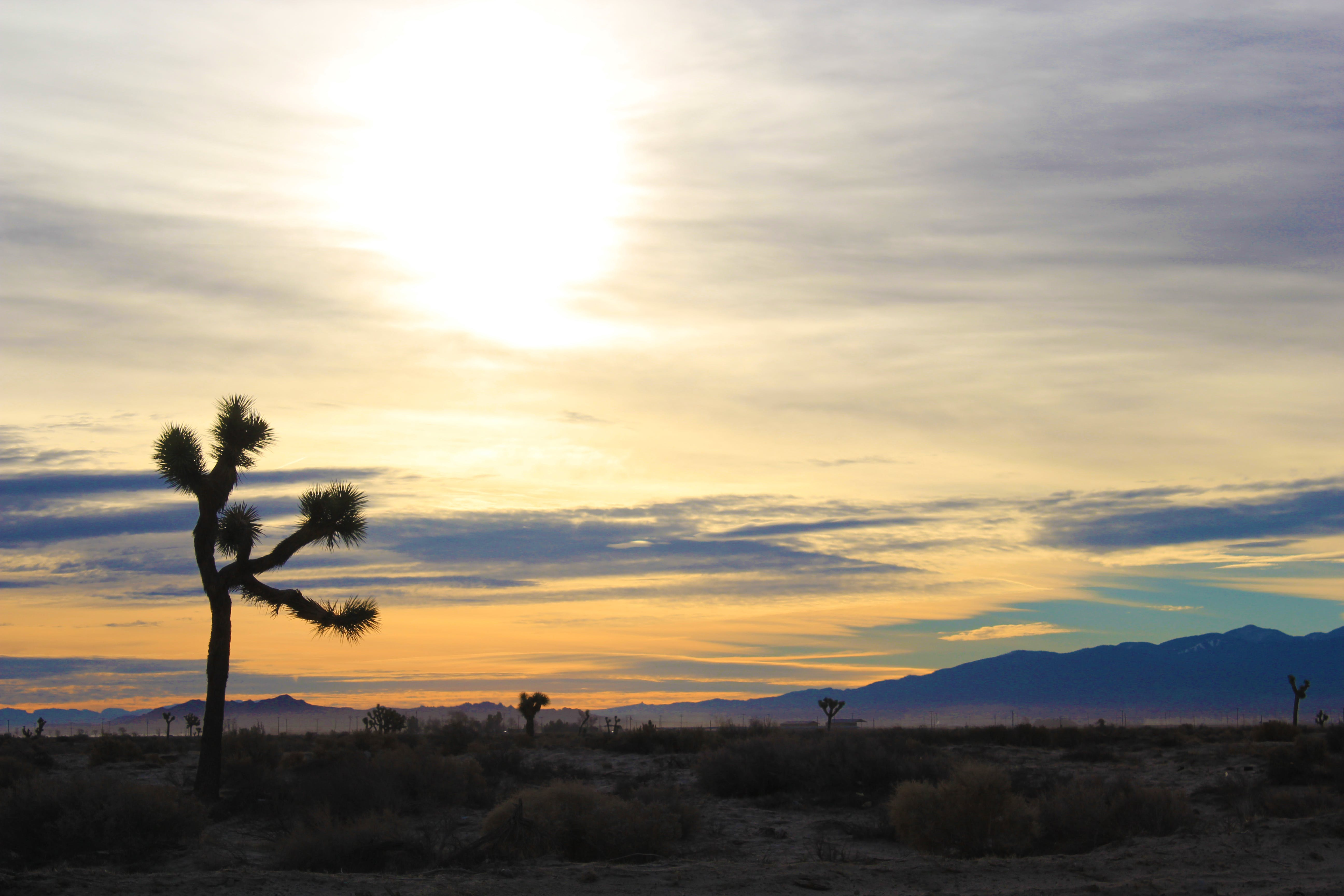 Free stock photo of sunset, joshua tree, antelope valley