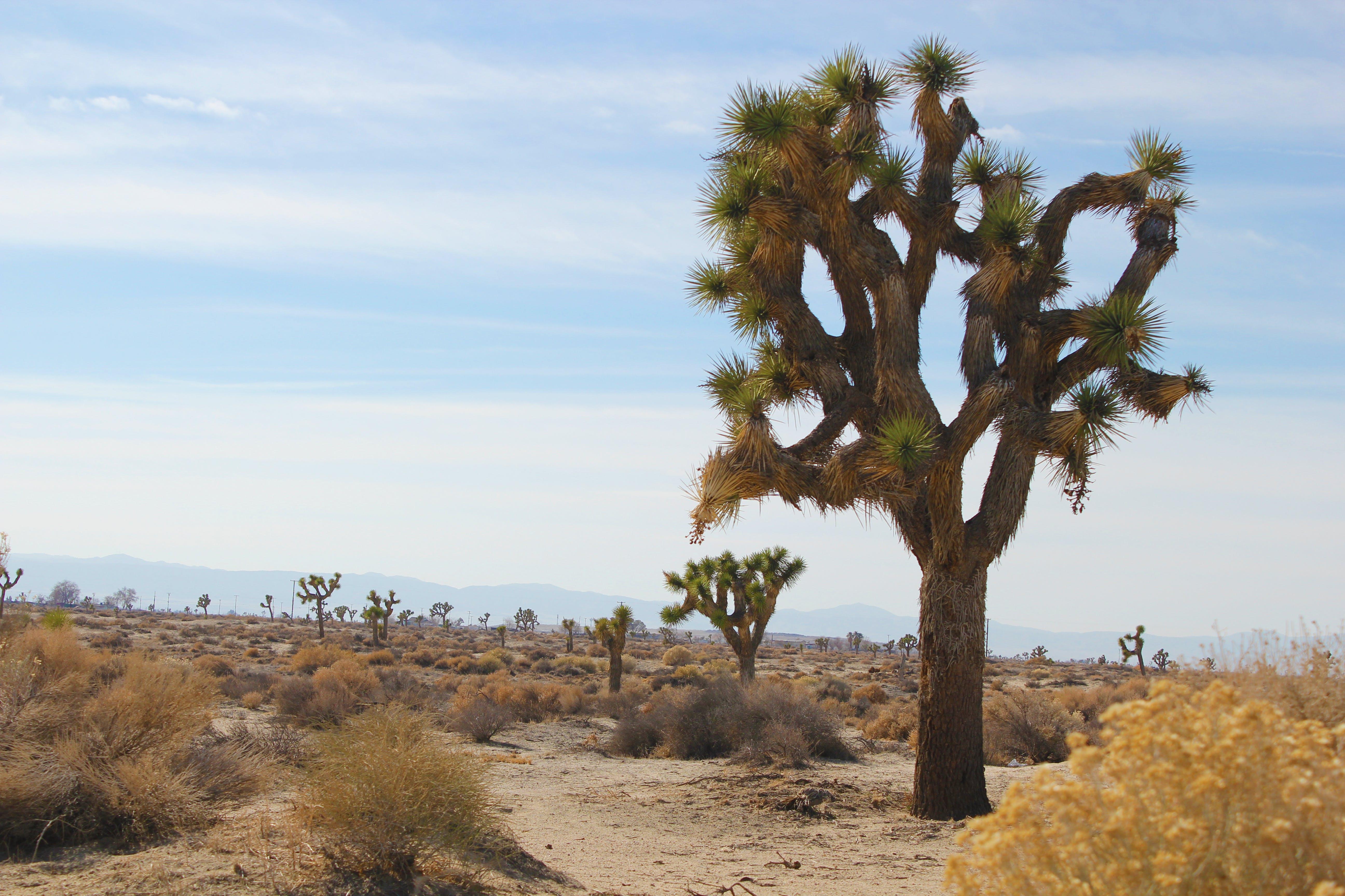 Free stock photo of antelope valley, joshua tree