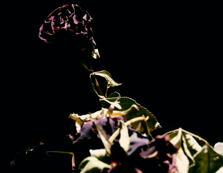 Free stock photo of black, flower, green, minimalism