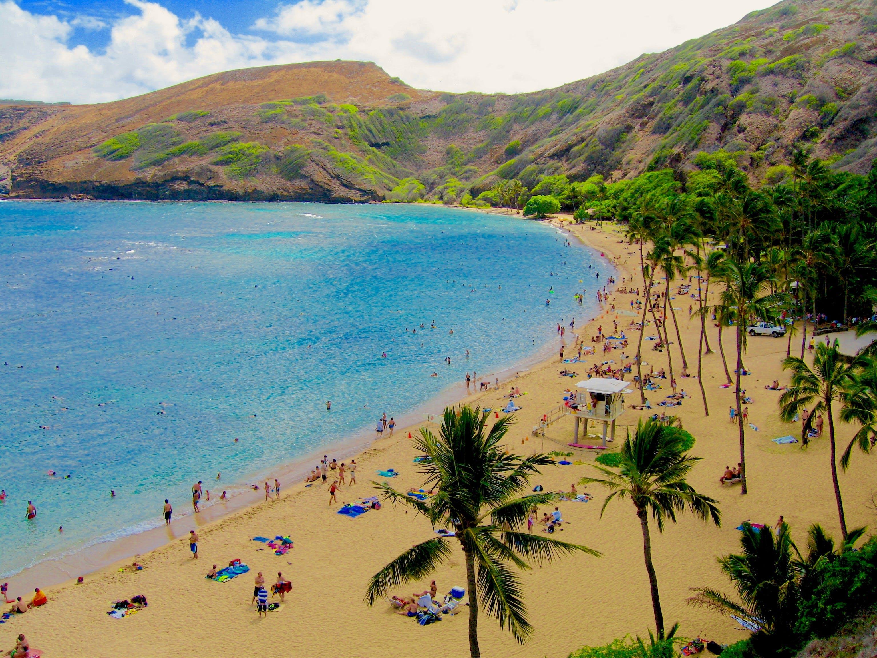 Free stock photo of beach, palm trees, reef, sand beach
