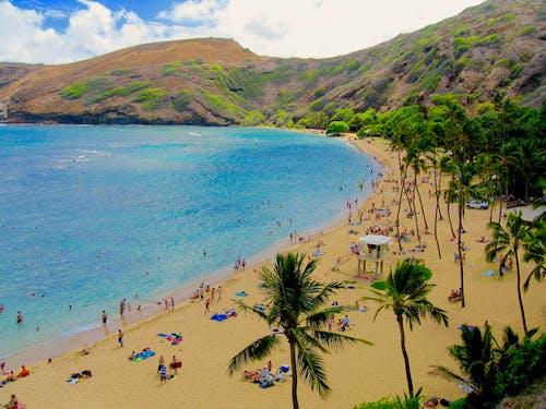 Darmowe zdjęcie z galerii z palmy, piaszczysta plaża, plaża, rafa