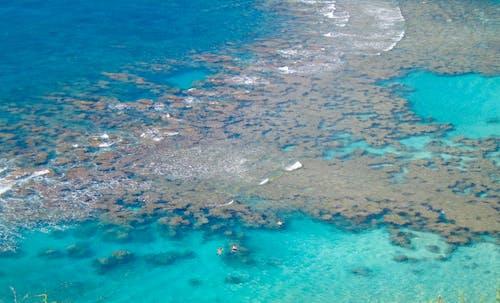 Δωρεάν στοκ φωτογραφιών με snorkeling, αναπνευστήρας, εναέρια άποψη, κοράλλι