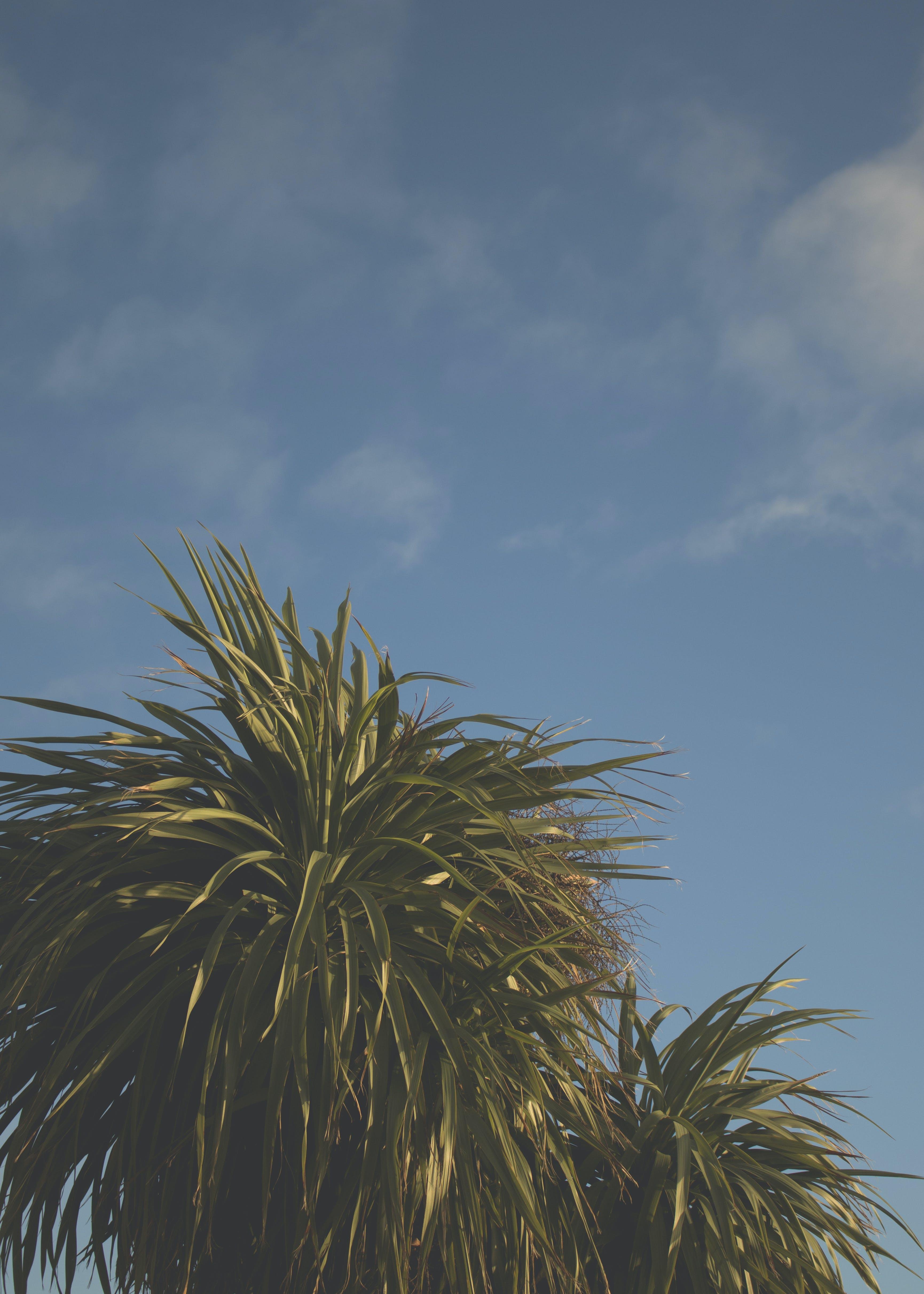 Free stock photo of blue sky, clouds, england, palms