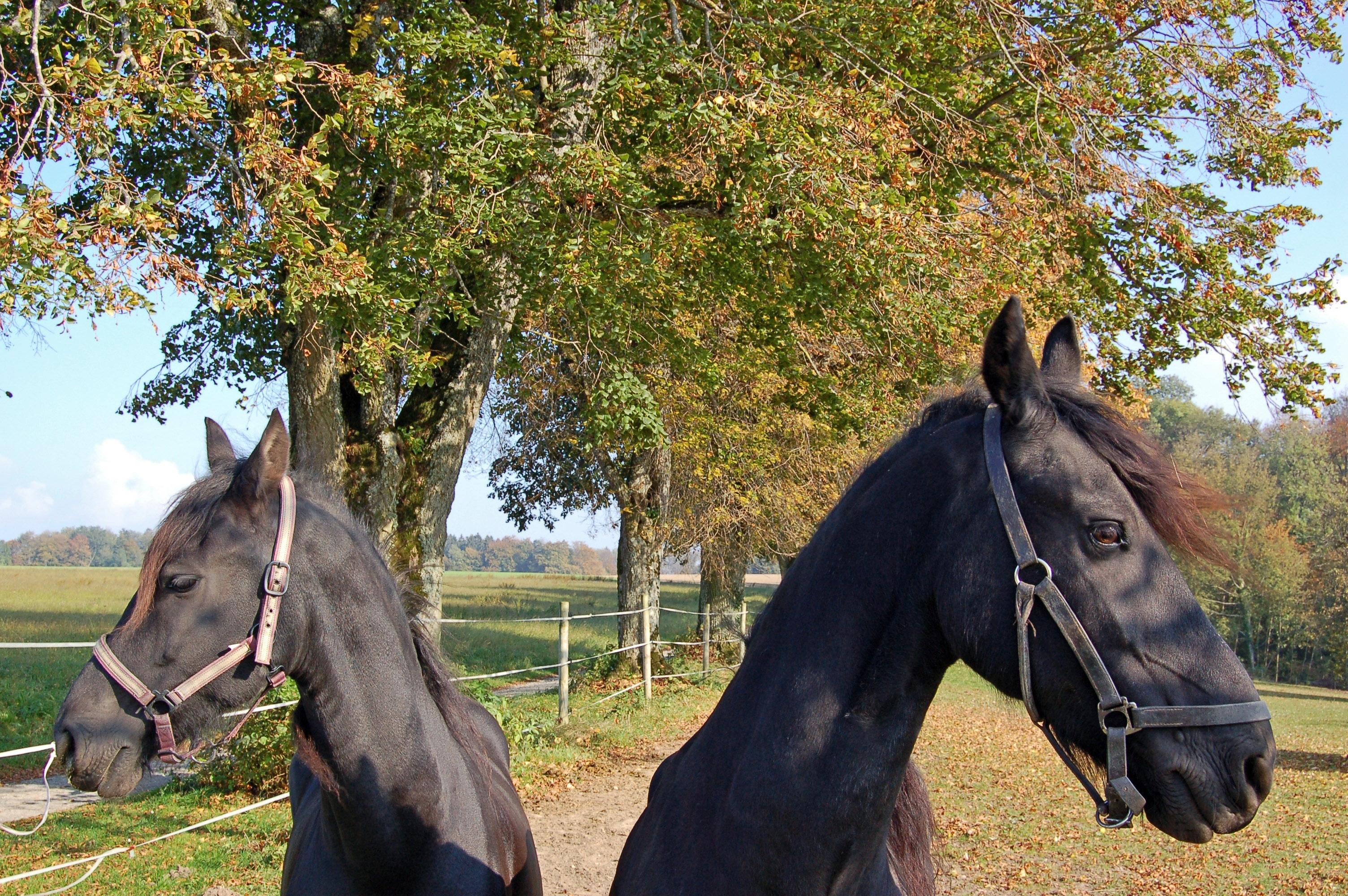 Atemberaubend Pferd Färbendes Bild Fotos - Malvorlagen Von Tieren ...