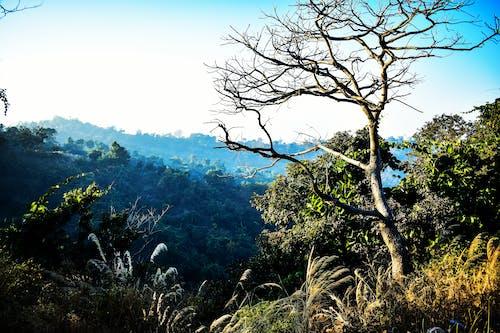 Δωρεάν στοκ φωτογραφιών με άγρια φύση, αντίθεση, βουνό, δέντρα