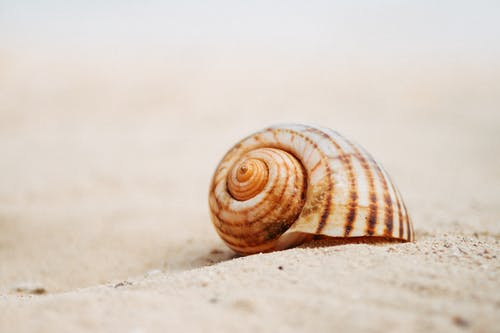 Brown and White Snail on White Sand