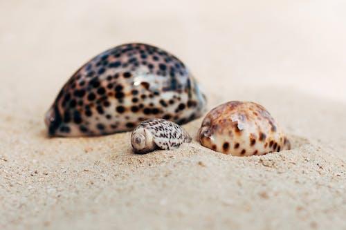 Free stock photo of sea shells